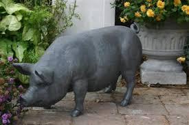 pig lead