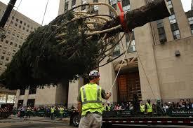 merry christmas it u0027s 72 degrees rockefeller center u0027s 2015 tree