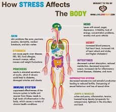 the effects of stress the body life in symmetry the effects of stress the body