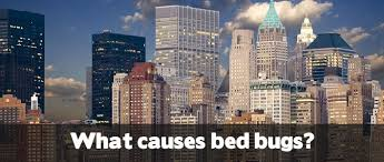What Causes Bed Bugs To Come Out What Causes Bed Bugs Bed Bug Treatment Site