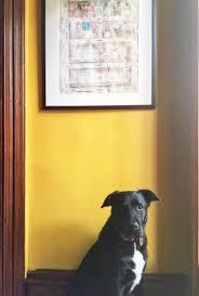 Indigo Dog House U0026 Ochre Design