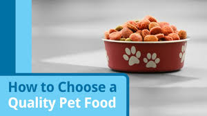 what is grain free pet food really petmd