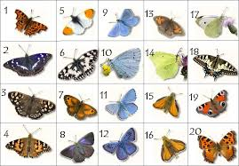 butterflies pictures quiz by spikeharby