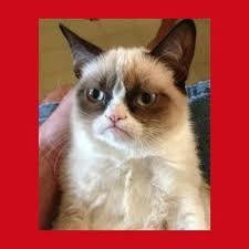 Tard The Grumpy Cat Meme - create meme grumpy cat grumpy cat meme grumpy cat tard