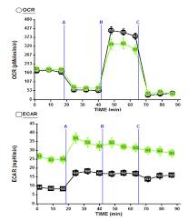 effects of gfp on c2c12 metabolism u2013 research in myogenesis