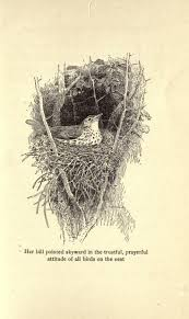 266 best birds nests and eggs images on pinterest bird nests