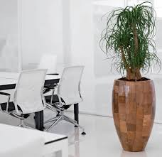 plant for office office plants office plant hire ambius uk