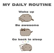 Meme Daily - my daily routine pusheen know your meme