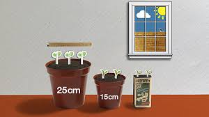 bbc dig in how to grow your veg on a windowsill