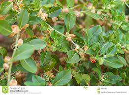 price of ginseng in india pharmacy online