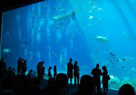 Home Depot Job Atlanta Ga The Asheville Foodie Georgia Aquarium Atlanta Georgia