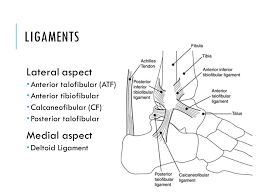 Posterior Inferior Tibiofibular Ligament Ankle And Lower Leg Chapter Ppt Download