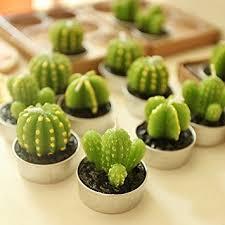 Home Decor Candles Amazon Com A Fun Cactus Candles For Home Decor Tealight Candles