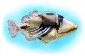 lagoon triggerfish rhinecanthus aculeatus line art and full