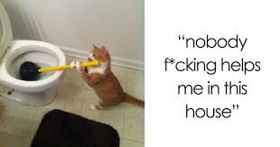Cat Memes Tumblr - 20 cat posts on tumblr that are impossible not to laugh at