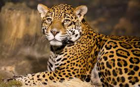 the meaning and symbolism of the word leopard