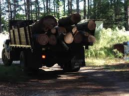 browns tree brown s tree service of raleigh tree services in raleigh