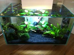 fluval edge tropical fish forums