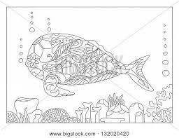 coral images illustrations vectors coral stock photos u0026 images