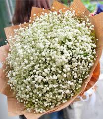 baby s breath flowers baby s breath bouquet beautiful baby s breath and solidago