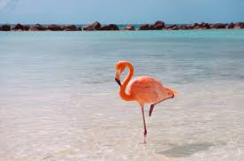 ask smithsonian why do flamingos stand on one leg at the