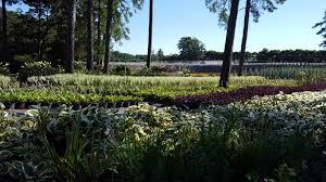 Azalea Topiary Taylor U0027s Nursery Inc