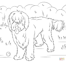 australian labradoodle coloring page free printable coloring pages