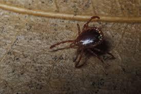 avoiding ticks missouri department of conservation