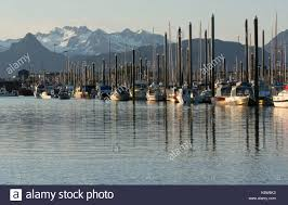 dozens of small boats are tied up at the homer small boat harbor