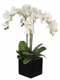 orchid arrangements orchid arrangements foter