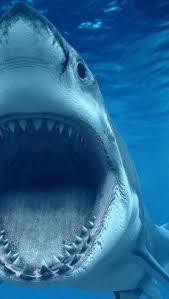 1048 best sharks images on pinterest shark week marine life and