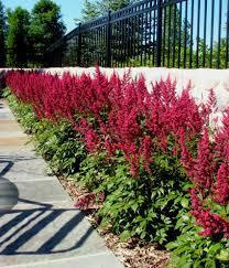 flower scenery hd the best flowers ideas idolza