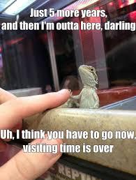 Lizard Meme - funny lizard in jail meme jokes 2014
