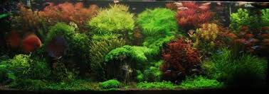 Aquascape Design Layout Top 5 Modern Aquascaping Designs For Your Freshwater Fish Aquarium