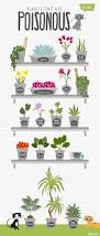 awesome indoor plants safe for cats 34 on apartment interior