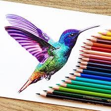 kingfisher color pencil drawing by danstirling http webneel com