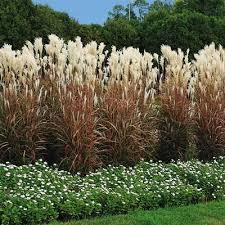 green value nursery perennials ornamental grasses