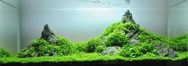 file aquascaping minilandschaft lennart jpg wikimedia commons