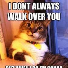 Success Cat Meme - success cat by awesomeone meme center