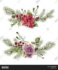 watercolor winter floral elements image u0026 photo bigstock