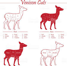 Loin Human Anatomy Venison Meat Cut Diagram Scheme Stock Vector Art 524510685 Istock
