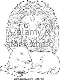 hand sketch lion head mane lion drawing animal sketch