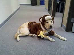 Dog Halloween Costumes Bret Michaels Pets Rock Dog Halloween Costume