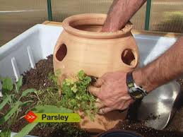 how to plant herb pots how tos diy