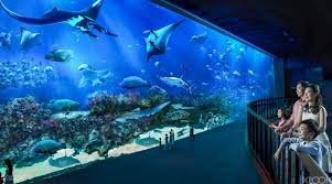 aquarium halloween s e a aquarium ticket sentosa singapore klook