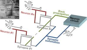 silicon synaptic transistor for hardware based spiking neural