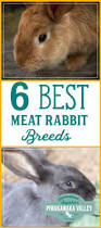 best rabbits for the homestead meat rabbits and rabbit