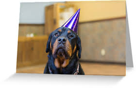 happy birthday from a rottweiler greeting cards by thejill