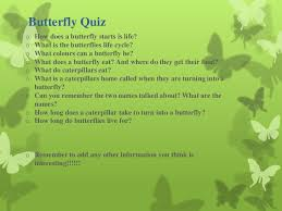 lifecycle of a butterfly
