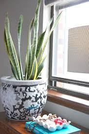 low light plants for bedroom best houseplants for low light popsugar home